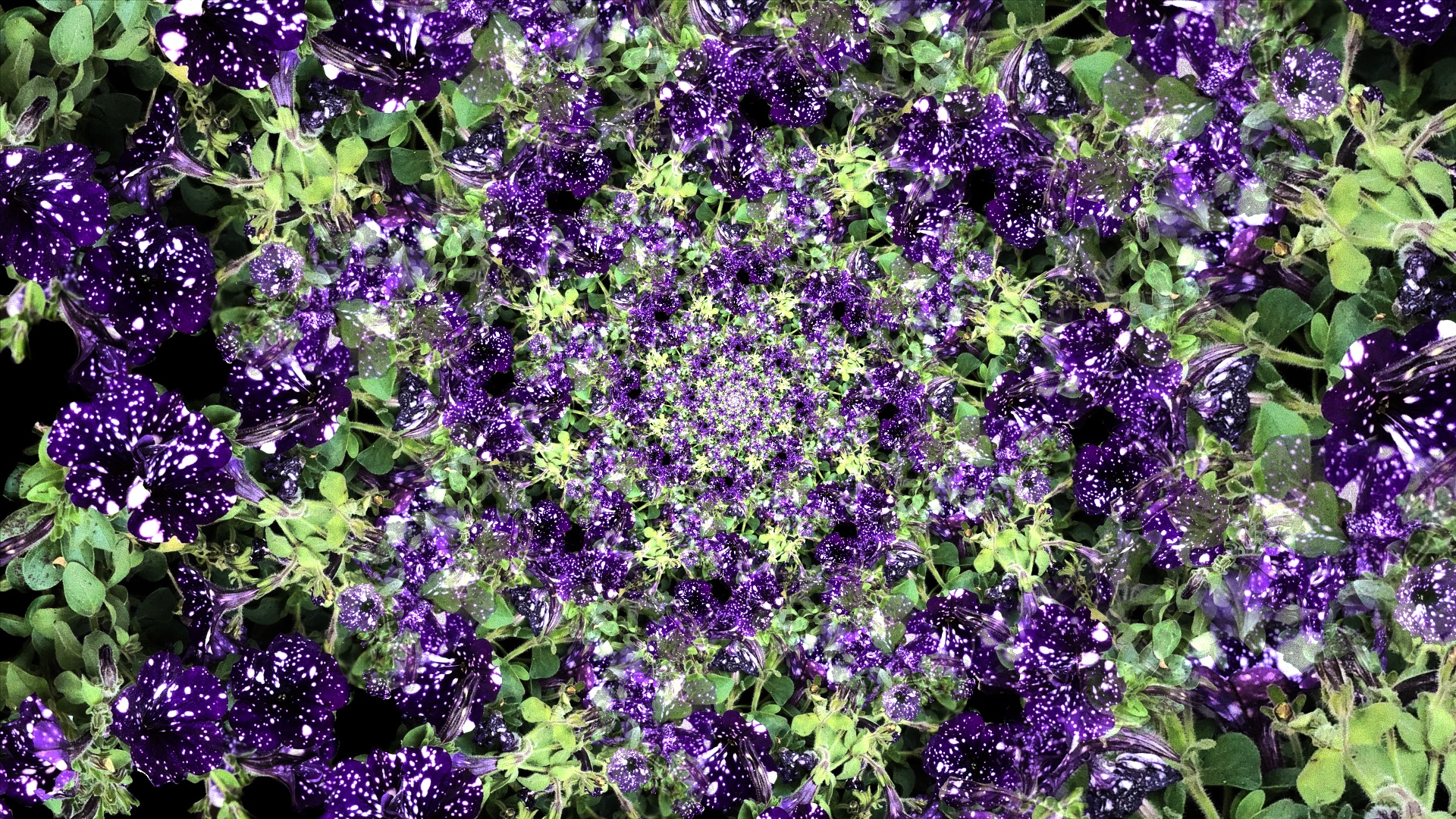 chaotica fractal algorithm